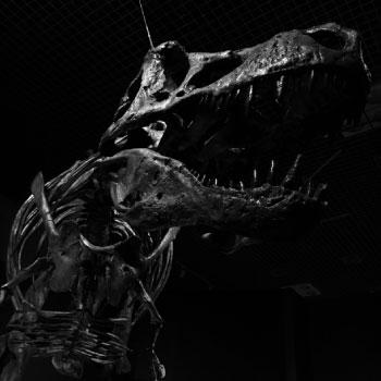 化石(イメージ)